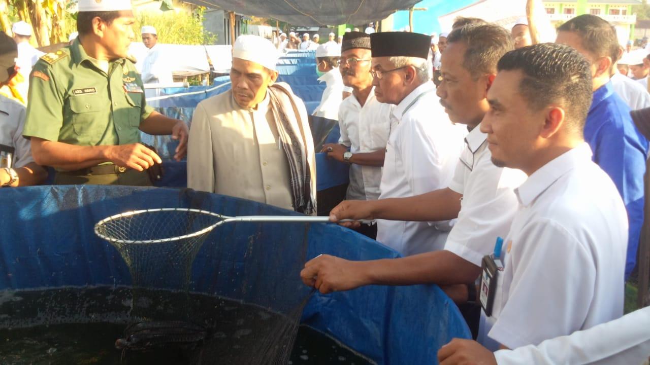 Guru Khalil Panen Ikan Lele Di Ponpes Darussalam 1