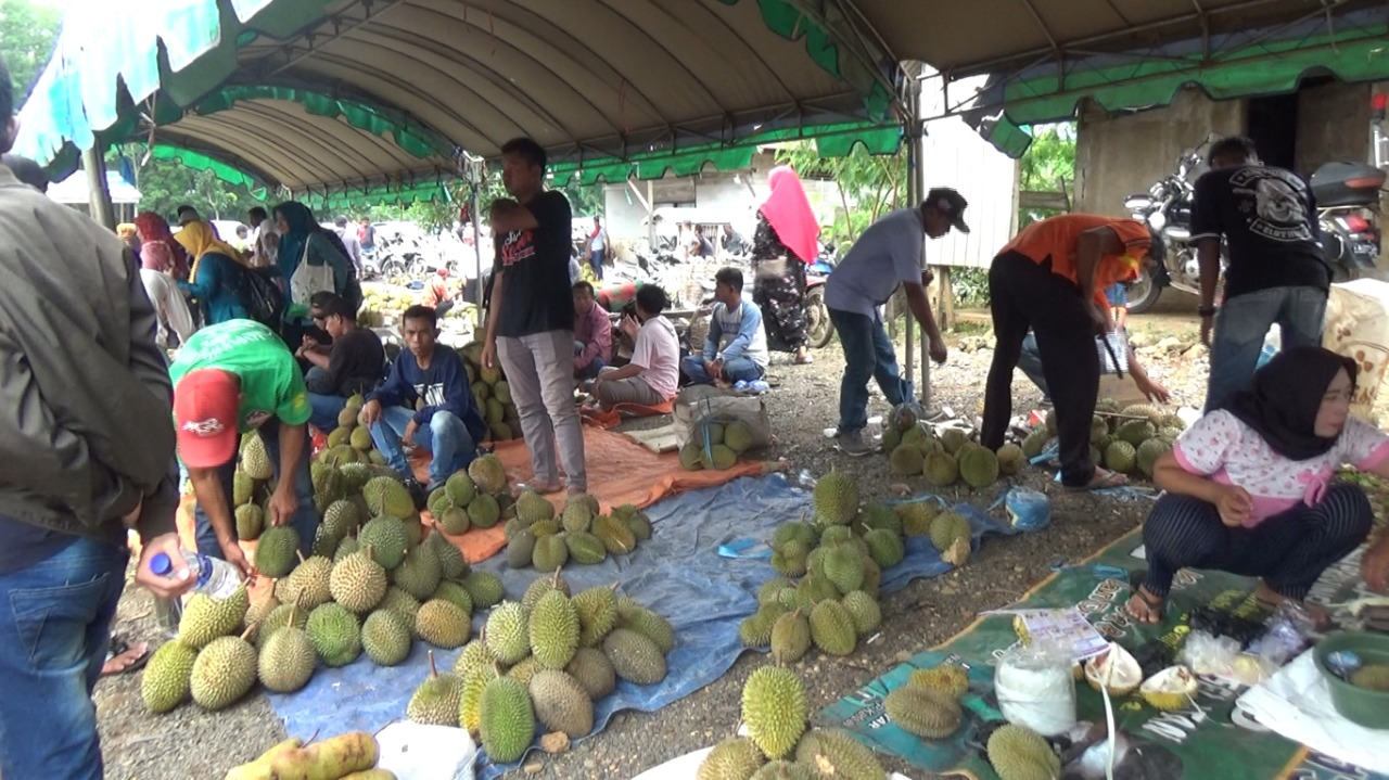 Danau Tamiyang Jadi Surga Sehari Pecinta Durian 4