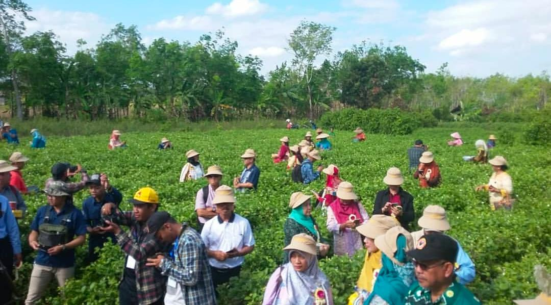 Menjanjikan, Ini 8 Produk Tani Unggulan Hortikultura Kabupaten Banjar 27
