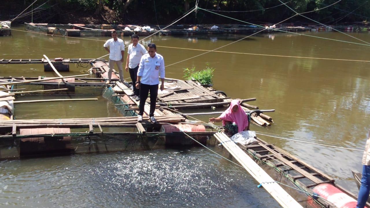 Kunjungi Pembudidaya Ikan, Kadiskan Banjar Monitor Harga Ikan 21