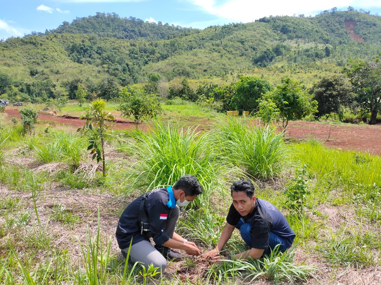 Total ada 250 batang bibit pohon dari beragam jenis yang ditanam di lokasi ini