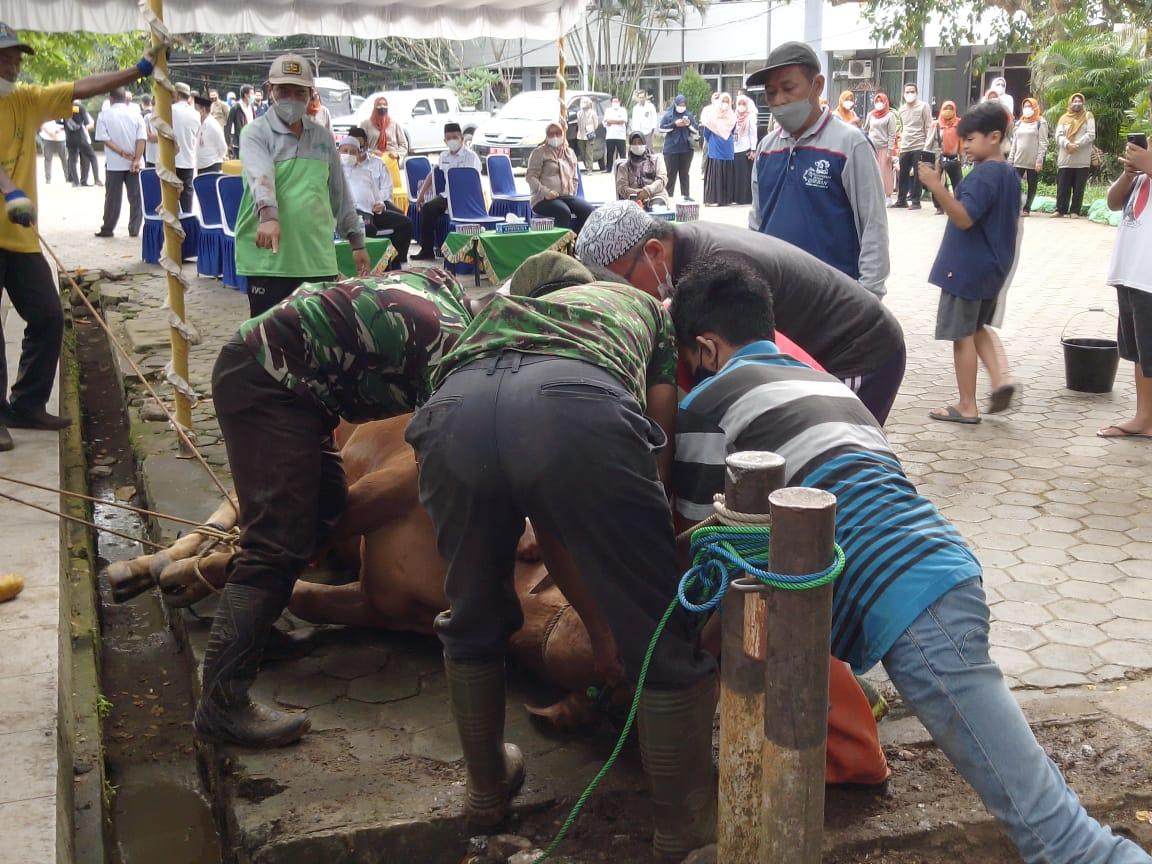 Tahun 2021 ini di Pemkab Banjar disembelih 8 ekor sapi dalam pelaksanaan ibadah qurban